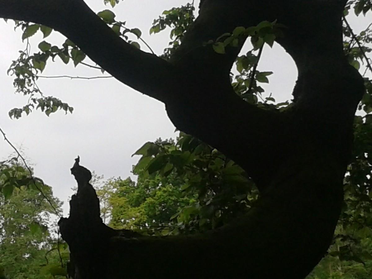 Sultan auf dem Baum